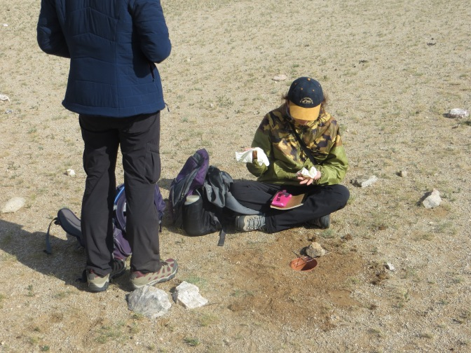 Two of the Mongolian graduate students are examining the variety of insects that have stumbled into their ground traps
